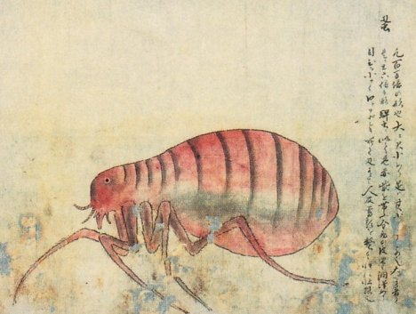 "from Kenbikyō Mushi No Zu's (""Illustrations of Microscopic Insects""), published in 1860"