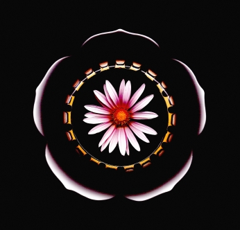 "zatista.com Tadeusz Smusz ""Flower Mandala"" $120"