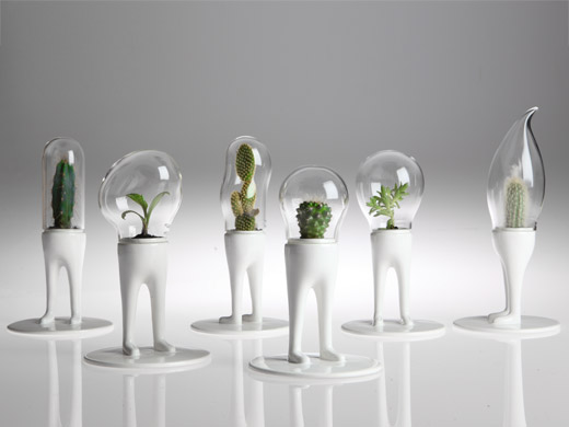 domsai terrariums